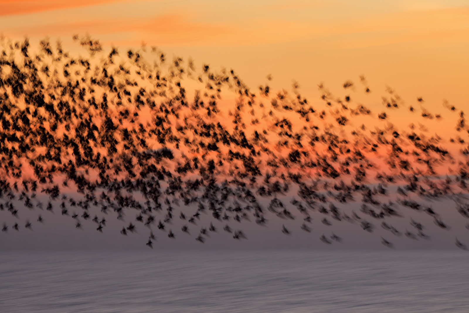 Starling Blurmuration at Sunset