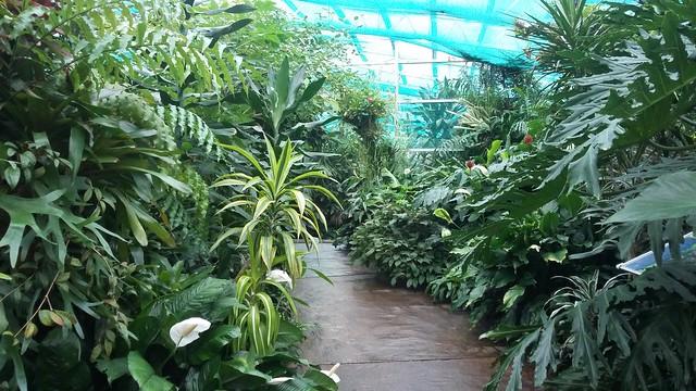 Exotic Plants, David Welch Winter Gardens, Duthie Park, Aberdeen, Oct 2019