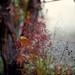 Nell' orto accanto al mio acero giapponese