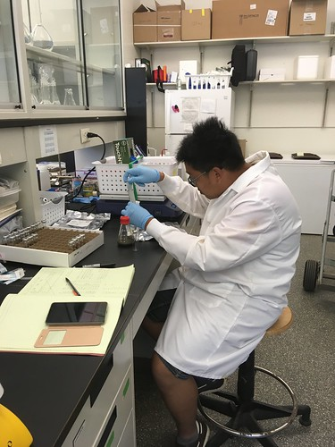 NRE master's degree studentSean Ooi conducts denitrification enzyme assays in the laboratory to estimate nitrogen removal from coastal wetlands.