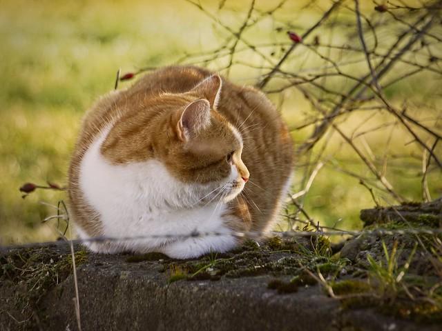 Cat Bokeh | 8. Februar 2015 | Tarbek - Schleswig-Holstein - Deutschland