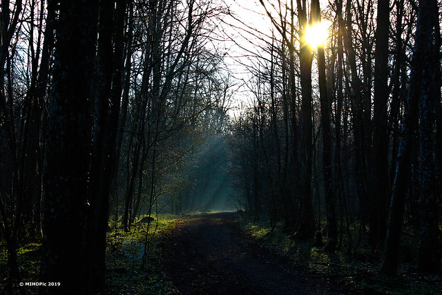 Im Wald - In the woods