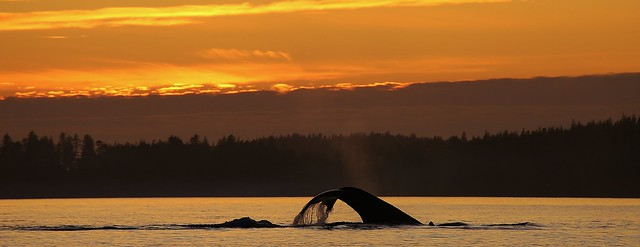Trevor Channel Sunset, Bamfield BC