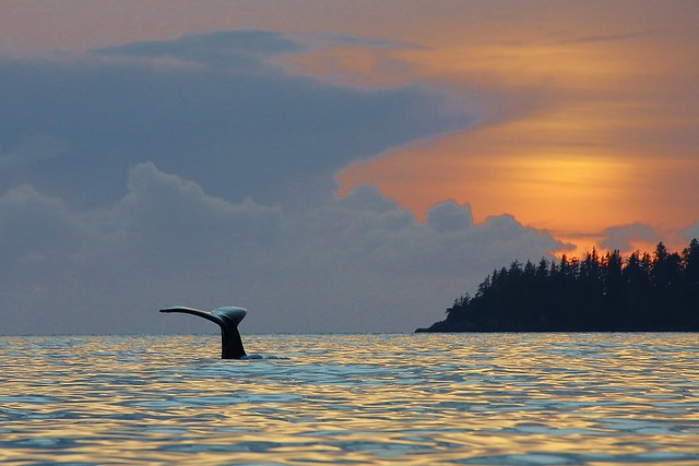 Whale Tail Sunset, Bamfield BC
