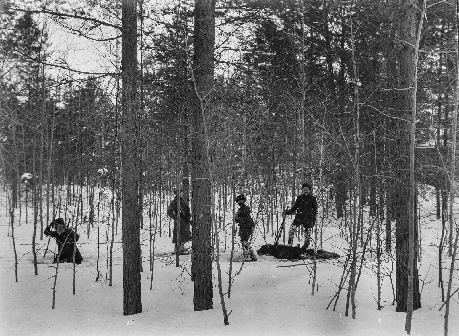 03. Томск. Убитого медведя перевозят на лыжах из леса