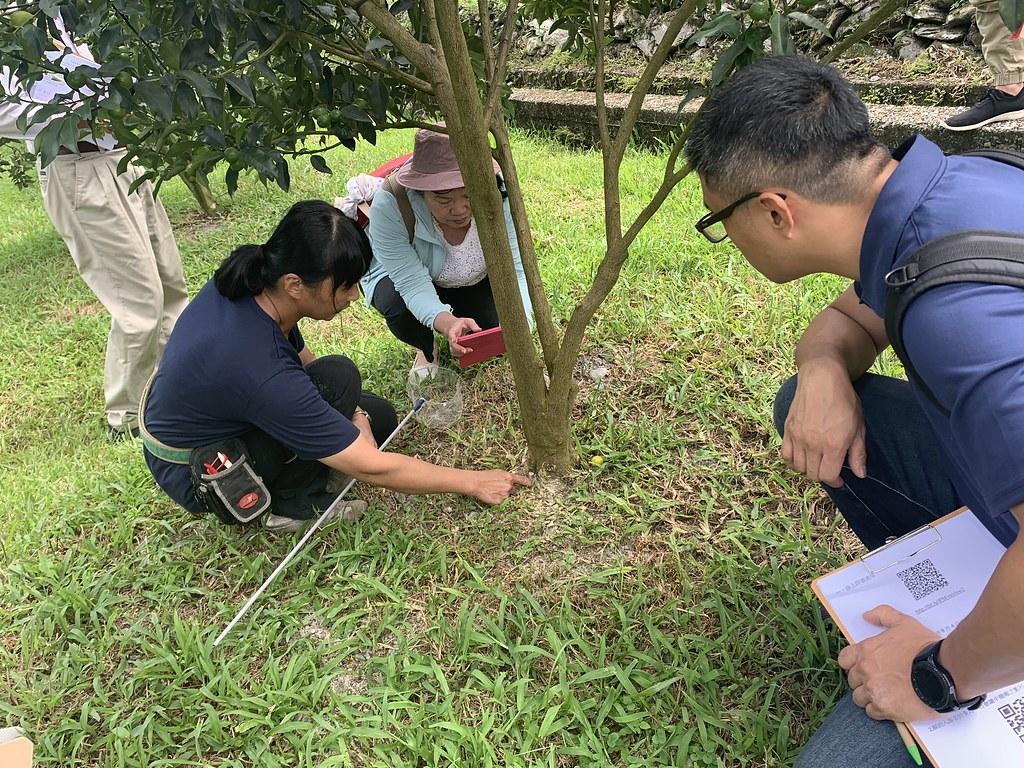 游淑珍現場說明金柑園區土壤與根系狀況。圖片來源:防檢局提供