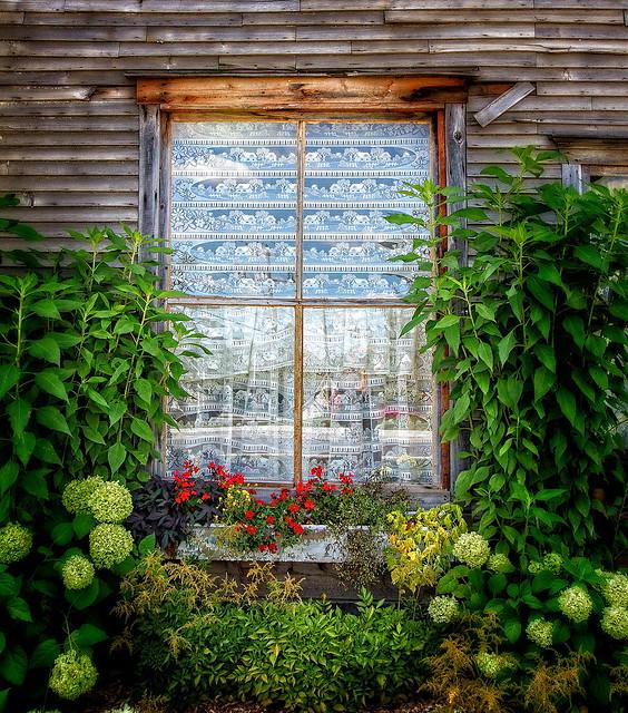 La fenêtre fleurie