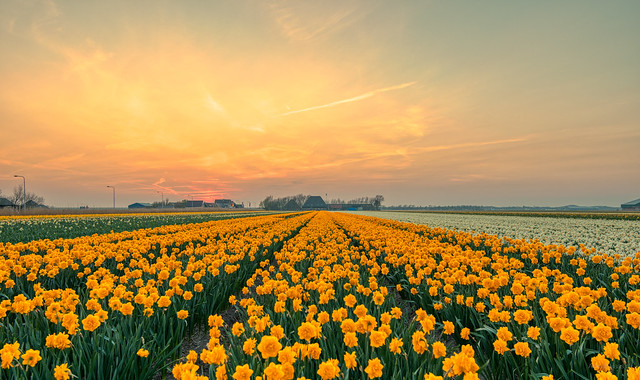 I wandered lonely as a cloud --   That floats on high o'er vales and hills, When all at once I saw a crowd, A host, of golden daffodils; Beside the lake, beneath the trees, Fluttering and dancing in the breeze.