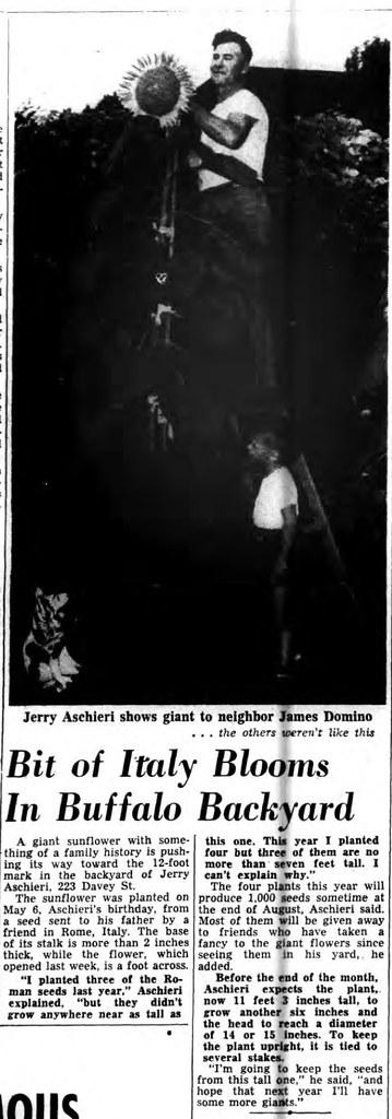 jerryaschieri-1954-sunflowe