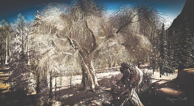 Winter Tree of Knowledge