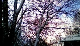 Wintery trees - TMT Menominee Michigan