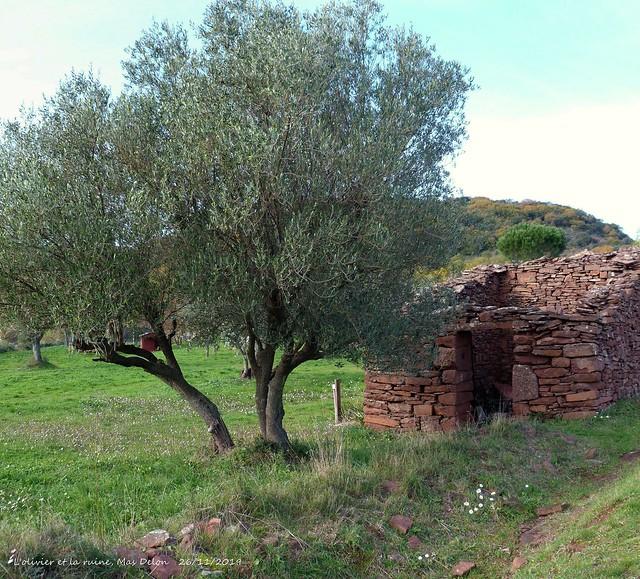 La ruine et l'olivier....