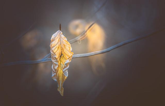 Winter leaves series - 7