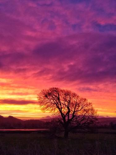 snapseed motorola g6 silsden dawn sunrise glorious sky pink purple orange yellow tree trees