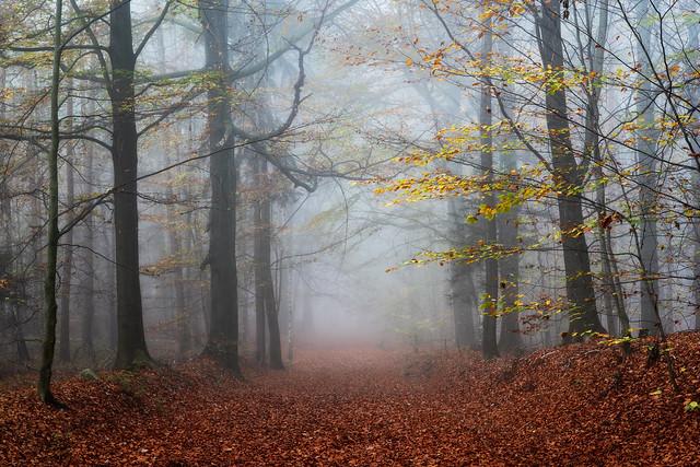 enchanted beech forest - Verzauberter Buchenwald