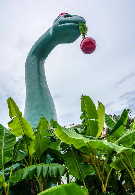 Santa Gertie plants tall DHS