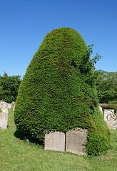 the Buxton dead