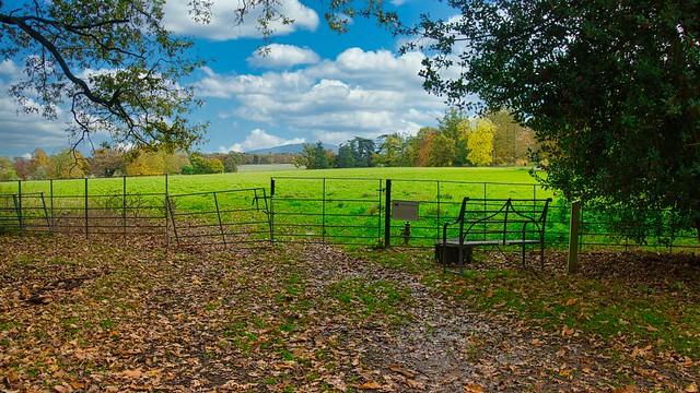 Attingham Park View to The Wrekin