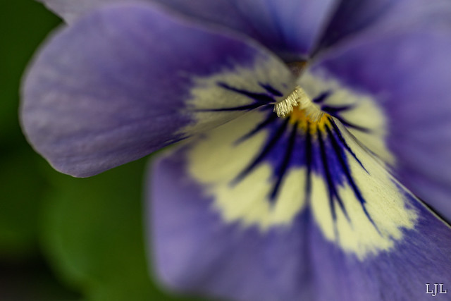 339/365 viooltje
