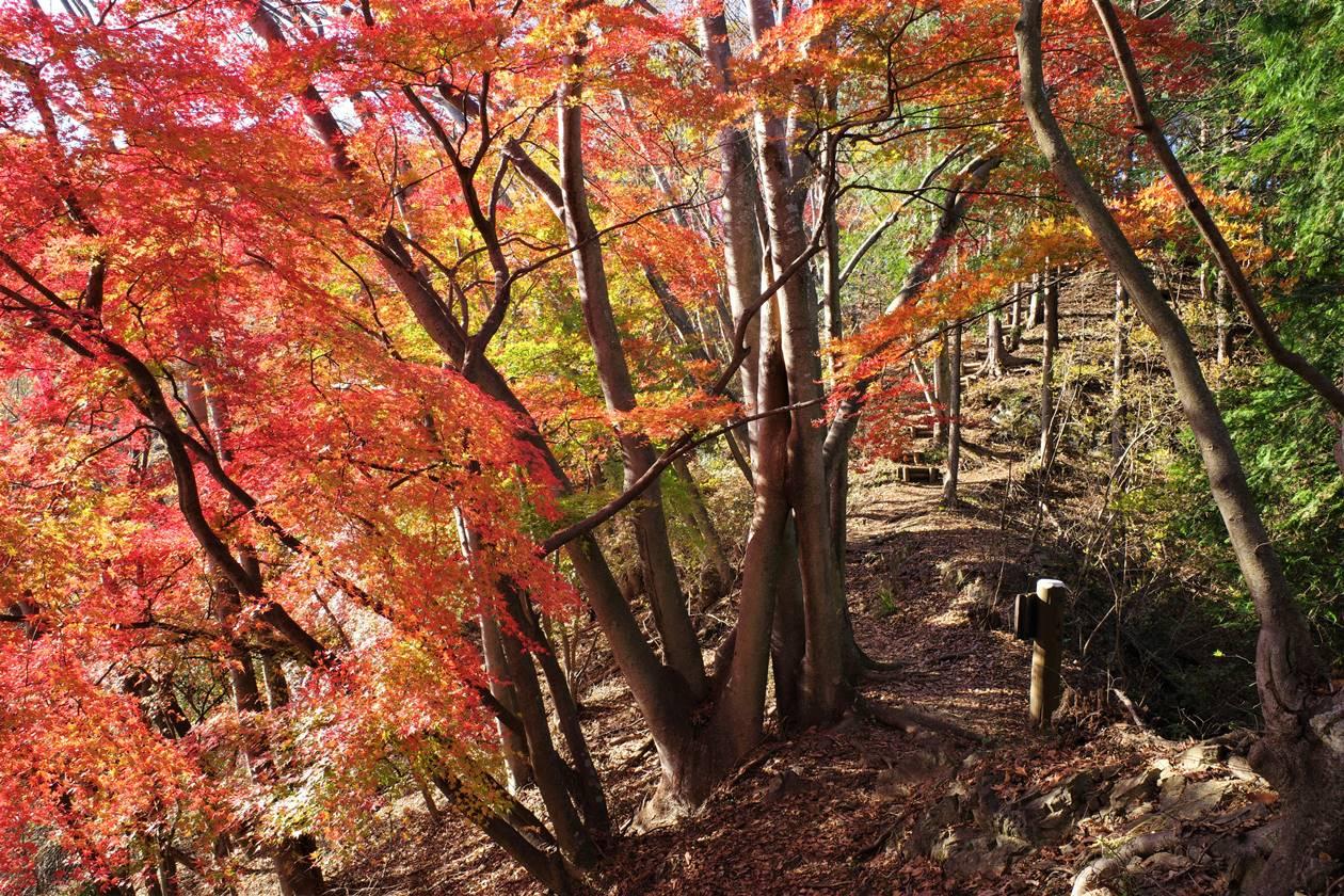 【秩父】破風山~華厳の滝 紅葉と冬桜を楽しむ日帰り登山