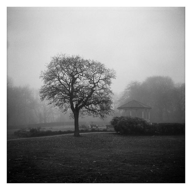 FILM - Late autumn atmosphere