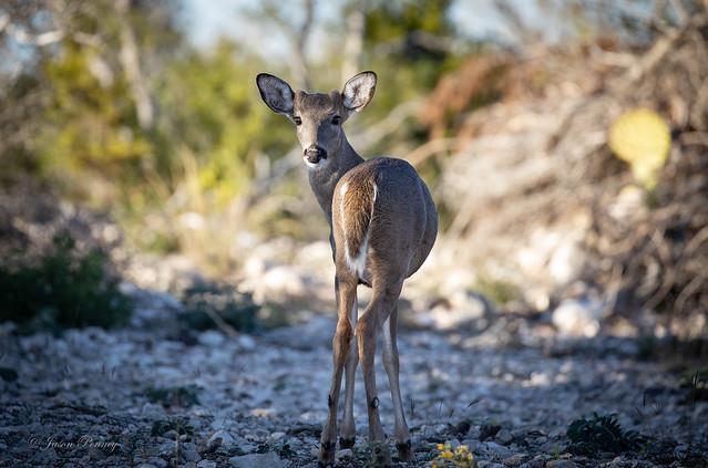 They're skidish during deer season around here..