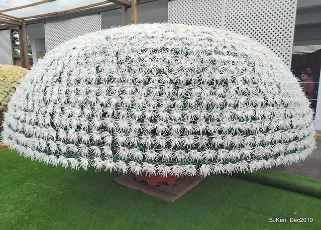 2019 台北士林官邸「樂在菊中」特展--- 花開富貴滿開盛放,繽紛多彩美不勝收!