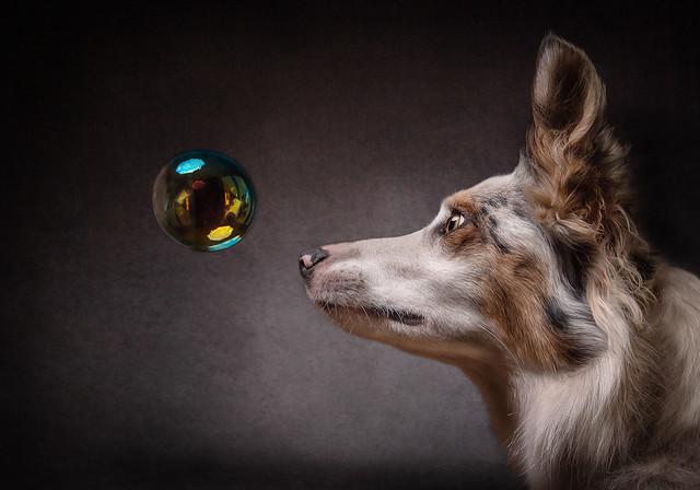 Bubble Alert