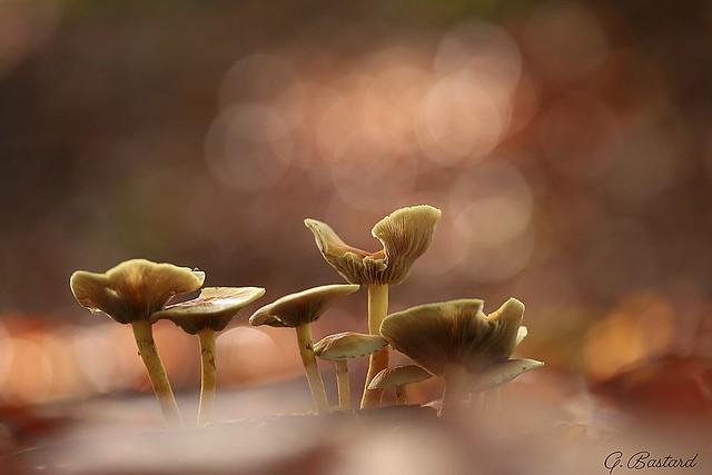 Forêt de mycètes