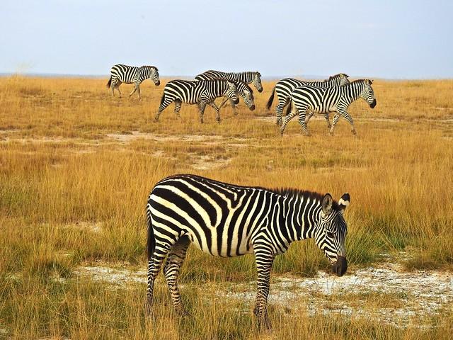 2108ex herd on the move  ** Explore**