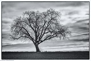 Donnerstagsmonochrome - Der einsame Baum