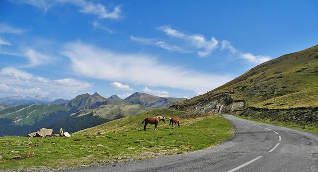 horses on Col d'Erroymendi 2015