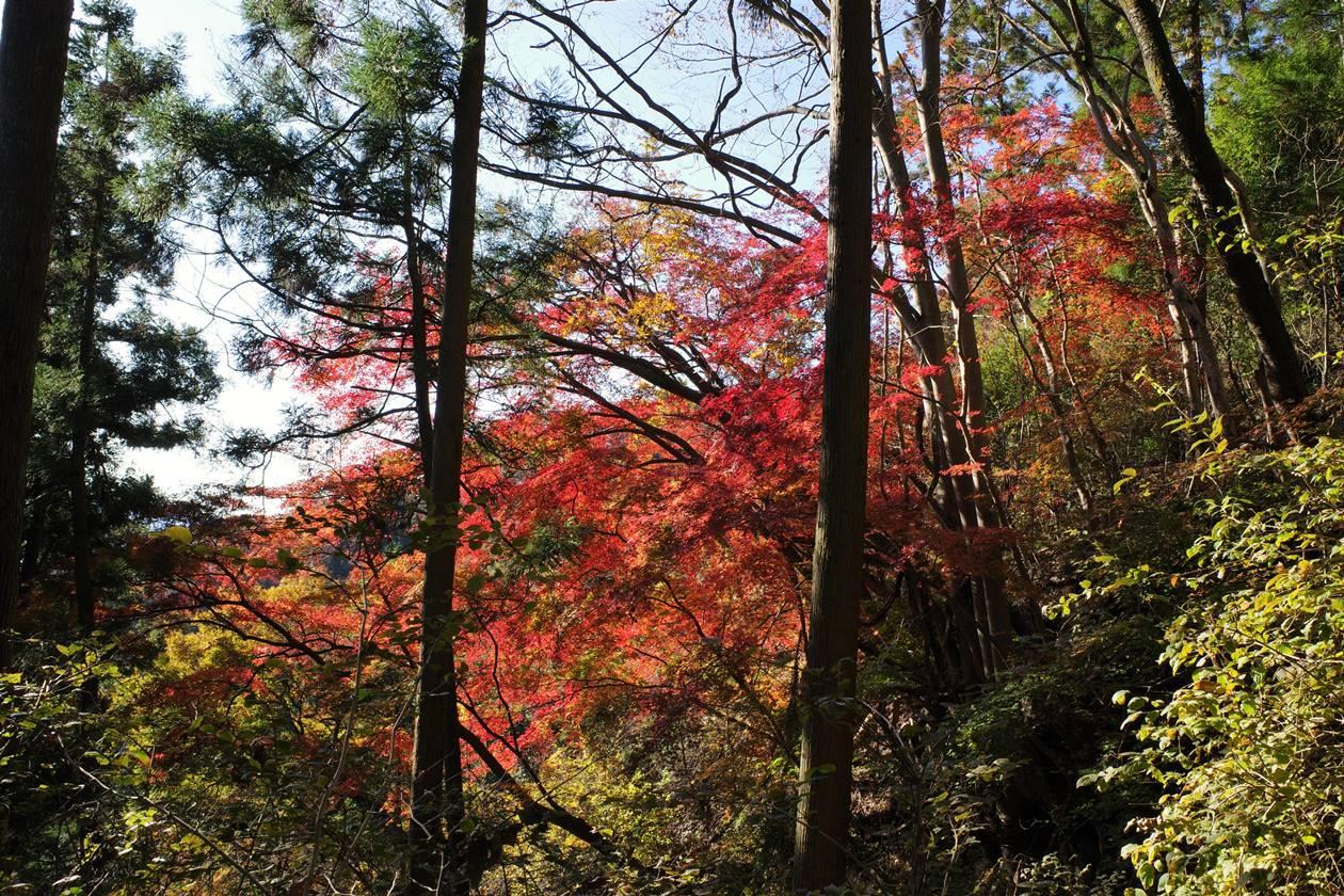 破風山登山道の紅葉