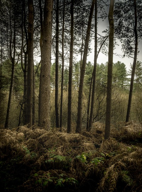 Delamere Forest, Cheshire