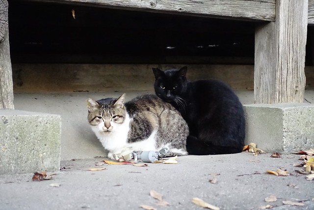 Today's Cat@2019-12-05