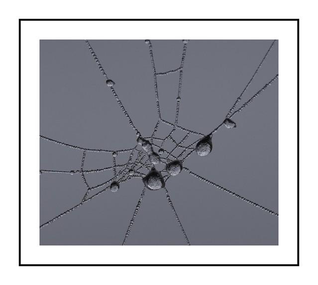 goutte d eau dans une toile d araignée