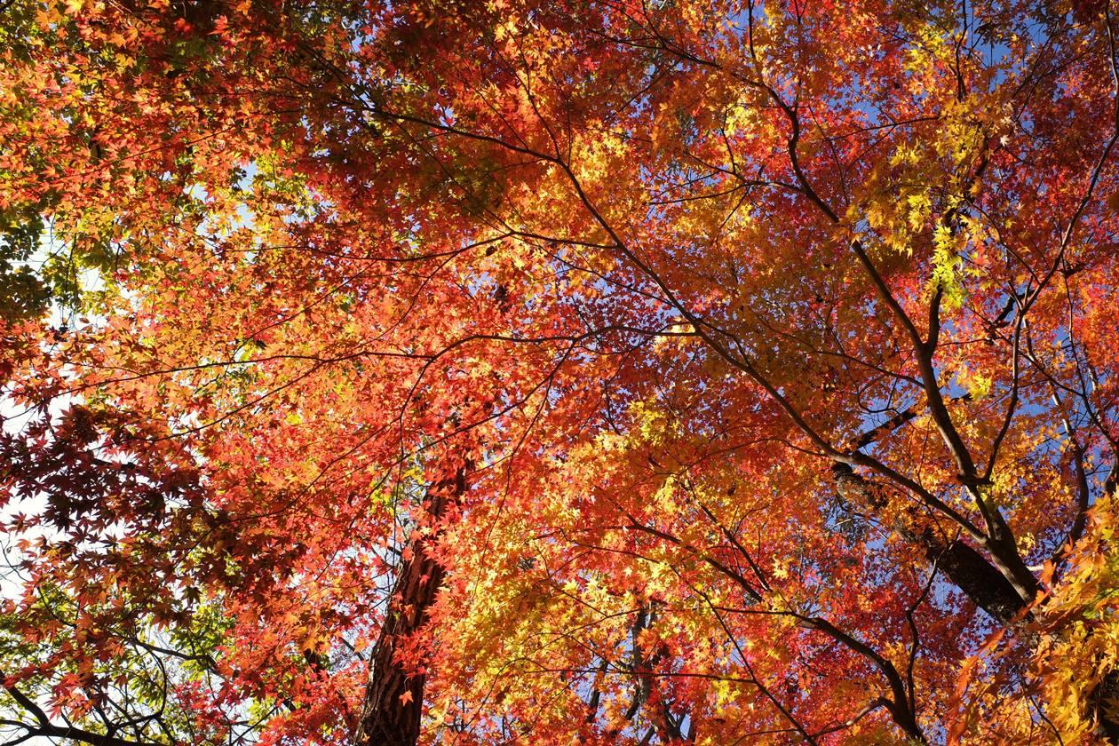 破風山の紅葉