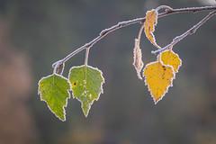 Herfst met een randje winter