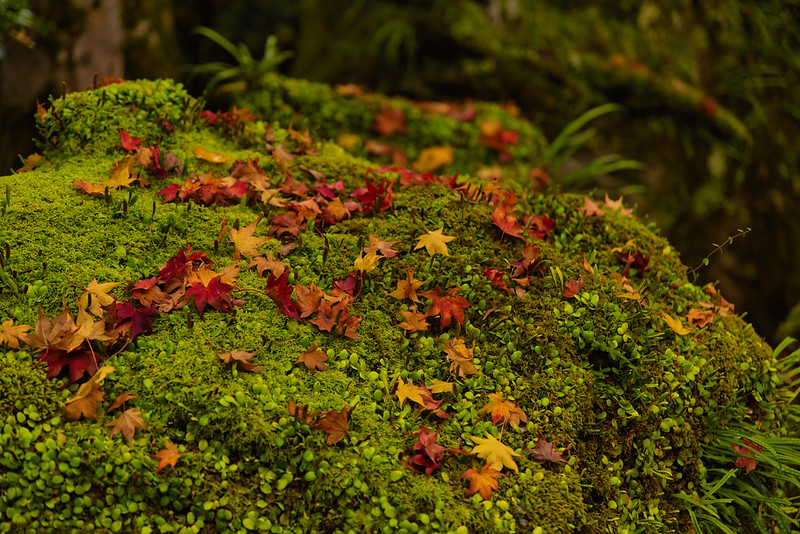 Defoliation of moss and maple