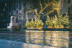 Christmas Trees | Kaunas
