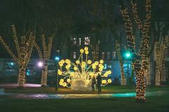 Lights | Kaunas