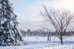 Foggy Snow