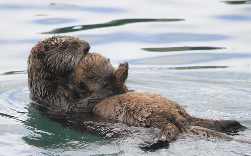 Let's Get Otter Here!