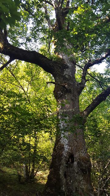 Bosque de Muniellos 6