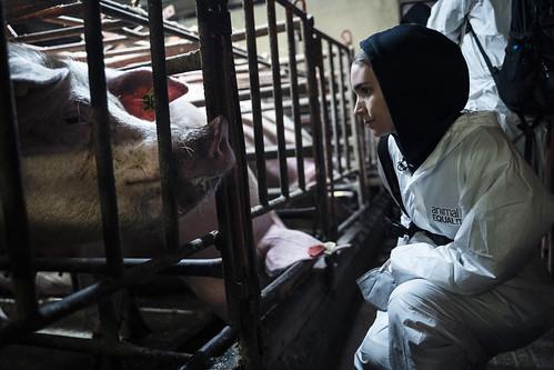 Rooney Mara se une a Igualdad Animal en una investigación