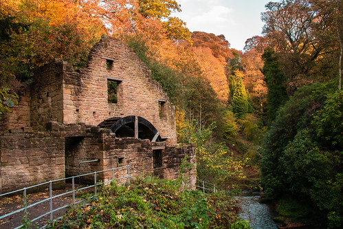 An image of Jesmond Dene Old Mill amid autumn leaves.