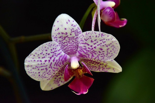 Orchid in november