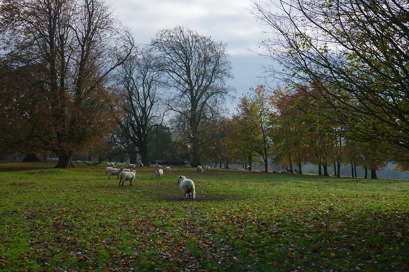 Sheep on a cold winters day, Syndale Valley Kent.