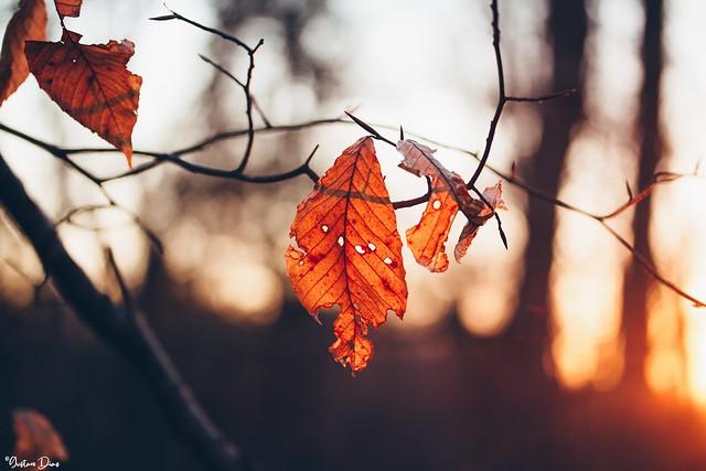 Now Autumn's