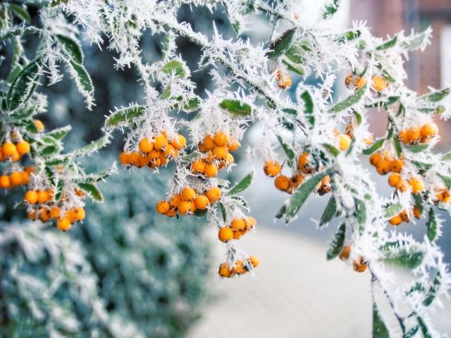 Winter Bokeh | 21. Januar 2019 | Tarbek - Schleswig-Holstein - Deutschland